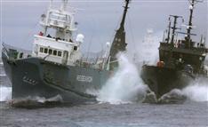 """日本、仏にSS""""指令者""""引き渡し要請 反捕鯨国に対し強い姿勢"""