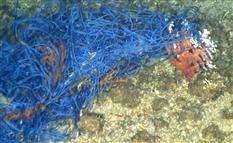 漁網は中国サンゴ密漁船のものと断定 「漁場が死滅している」