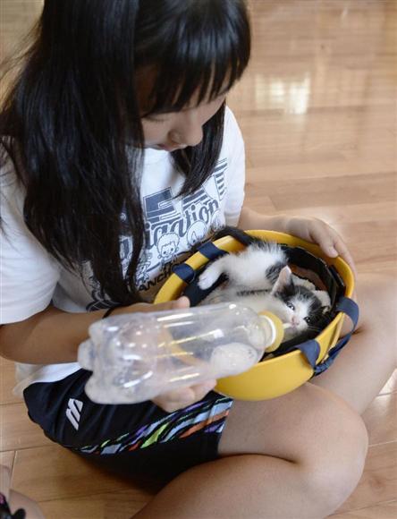 口永良部島・新岳が噴火し、屋久島の避難所で連れてきた子猫にミルクを与える中学生=29日午後、鹿児島県の屋久島