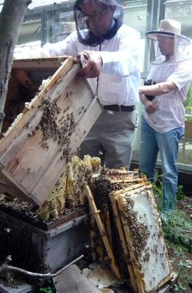 ミツバチ養蜂スタートアップ講座で巣箱の説明を受ける参加者ら=大阪府箕面市の箕面公園昆虫館