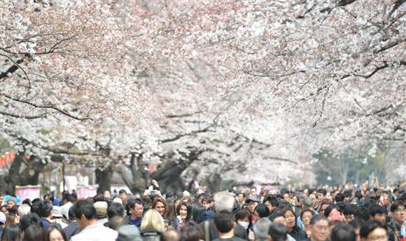 上野公園では桜が見頃を迎え、多くの観光客らでにぎわっている=3月28日(宮崎瑞穂撮影)