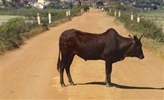 「牛1頭または50万円あげます」移住支援に外国人が飛びついた