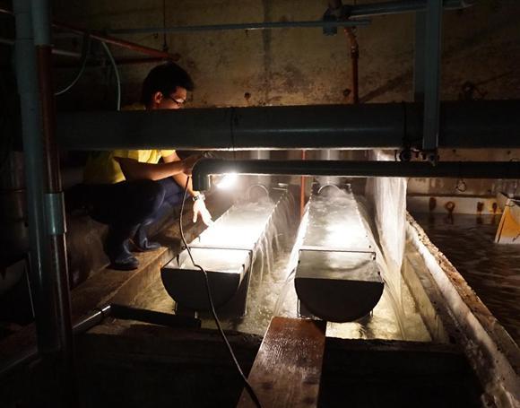 """ピラルクの水槽から脱出した金魚が""""潜伏""""していた浄化槽"""