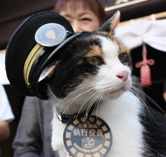 昨年6月に死んだ和歌山電鐵貴志駅の「たま駅長」は2007年、日本初の猫の駅長として就任。その年の乗客数が2割増え、県全体に11億円もの経済効果をもたらした。