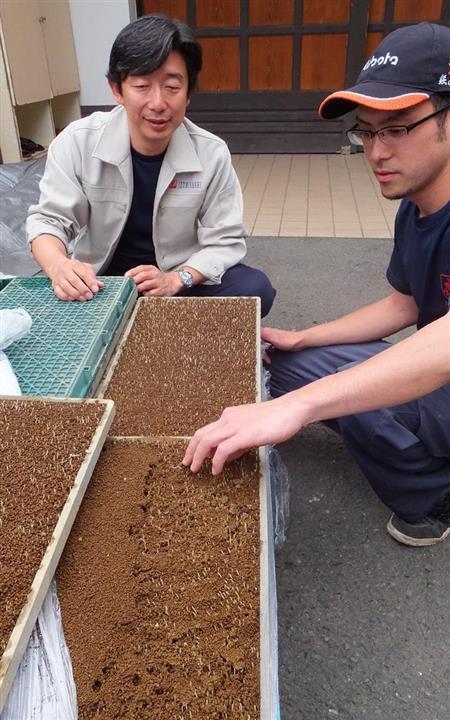 酒米の芽の状態を確認する橋場友一社長(左)と蔵人。丁寧な米づくりが低精米酒のベースだ=神奈川県海老名市の泉橋酒造