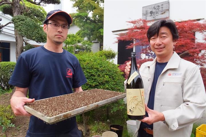 泉橋酒造の地元は古くから「海老名耕地」と呼ばれる穀倉地帯。原料の酒米を種から育てている。右は橋場友一社長=神奈川県海老名市