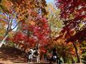 紅葉週末から見頃…高尾山は18日ごろ 関東以西、台風影響も