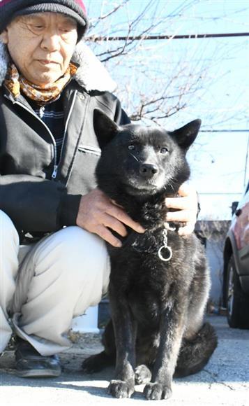 南アルプス犬舎の有墨博文さん。飼育している7頭の甲斐犬のなかで最年長で賢い「カイ」