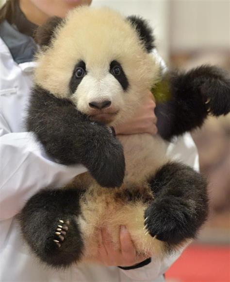 赤ちゃんパンダは 彩浜 和歌山のレジャー施設 イザ