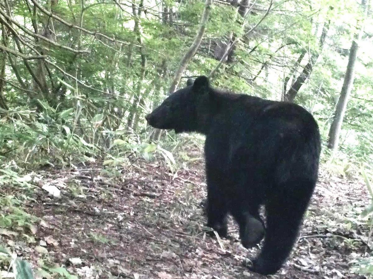 クマの画像 p1_18