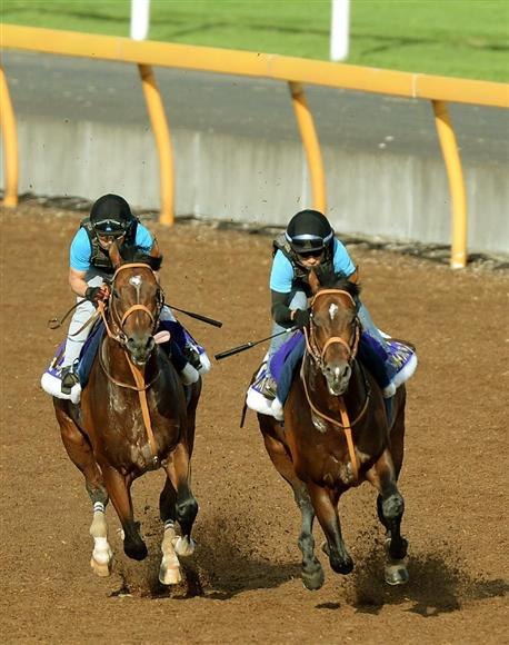 モーリス(左)とリアルインパクト=4日、美浦トレセン(撮影・北野浩之) モーリス(左)とリアルイ