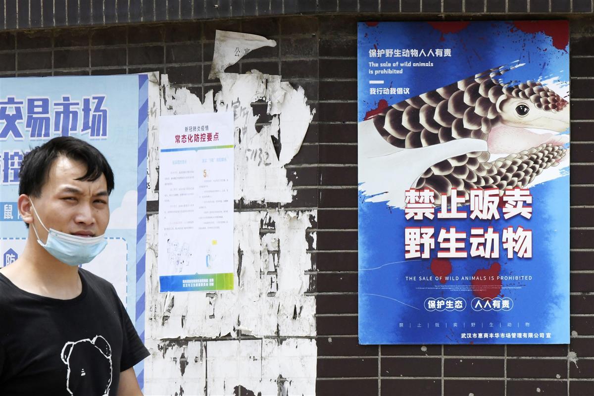 野生 動物 中国